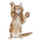 Комплексы для кошек